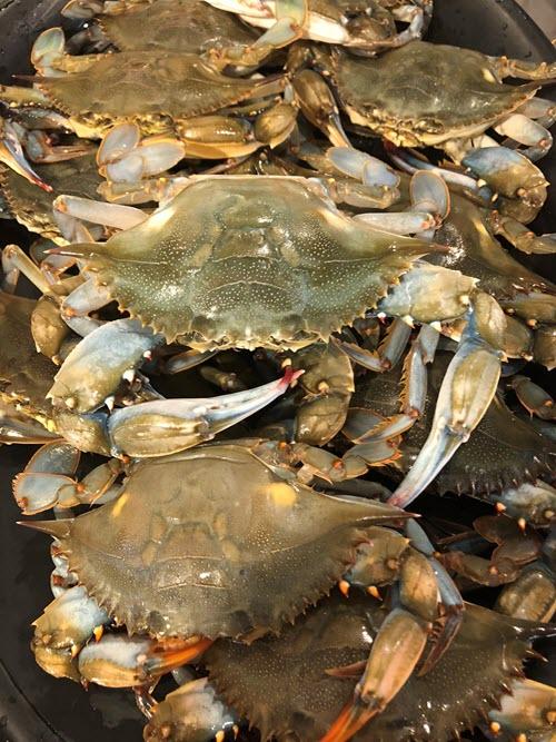 soft Shells flourtown